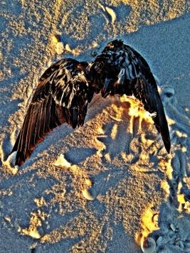 wings wp edit