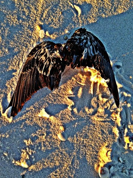 Grounded flight of freedom(remix)