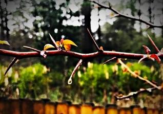 drops-crop edit WP-crop
