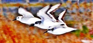 birds tri crop edit WP