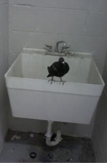 Mindy bird WP